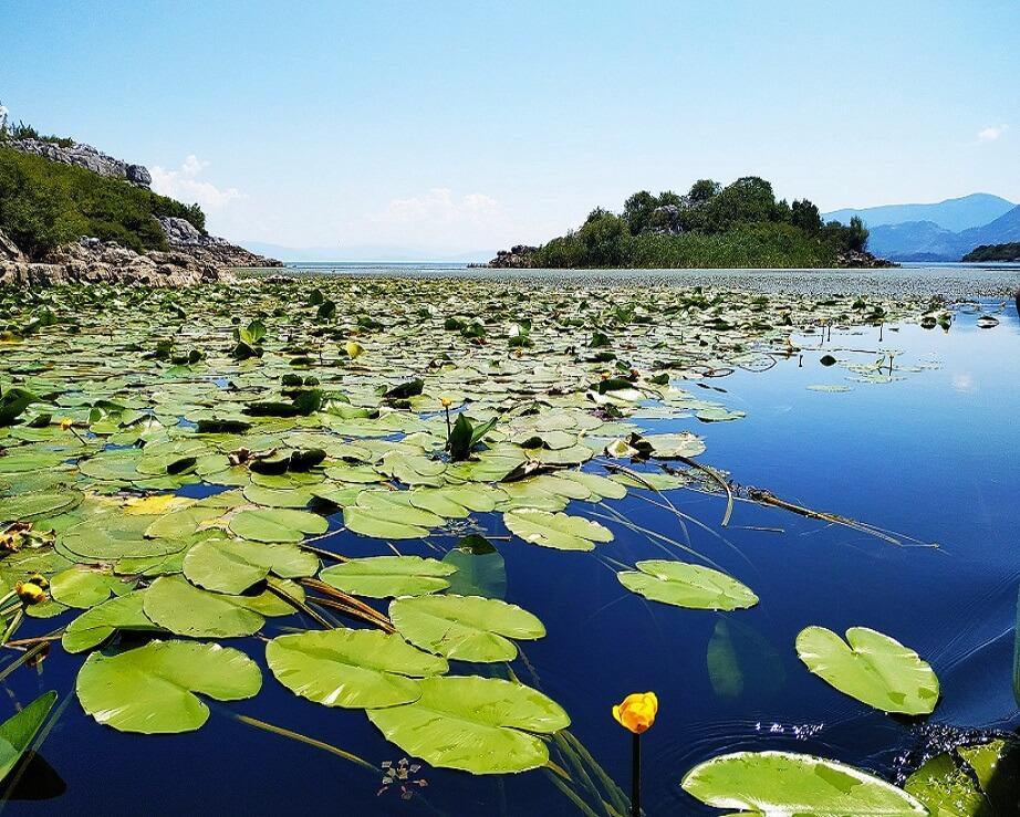 Ljepota Skadarskog jezera
