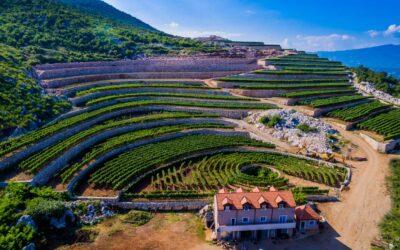 Vinarija u kojoj nastaje nova epoha vinarstva – jedinstveno u svijetu pjenušavo vino od vranca