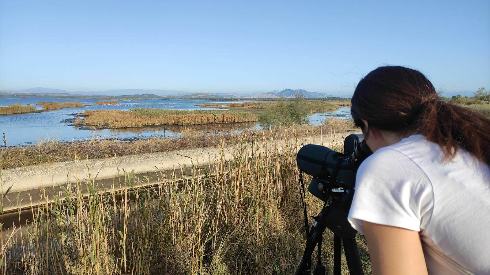 All 12 months the birds can be observed in Ulcinj's Salina