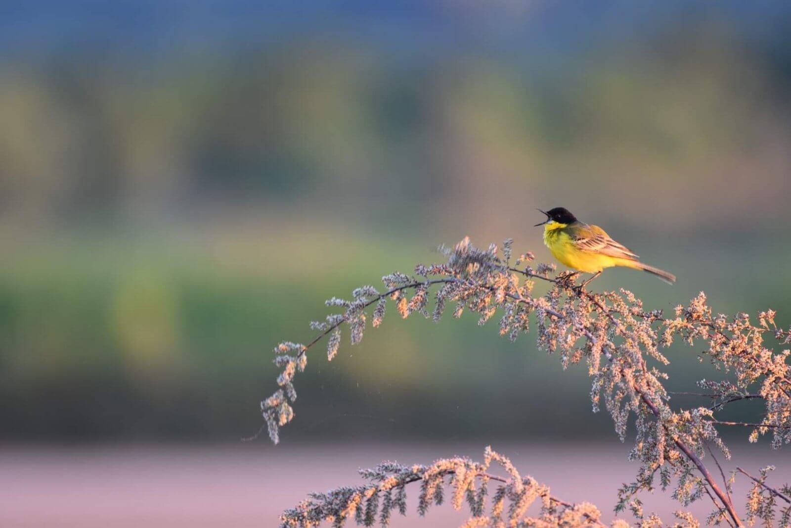 European Birdwatching weekend organized by Birdlife International