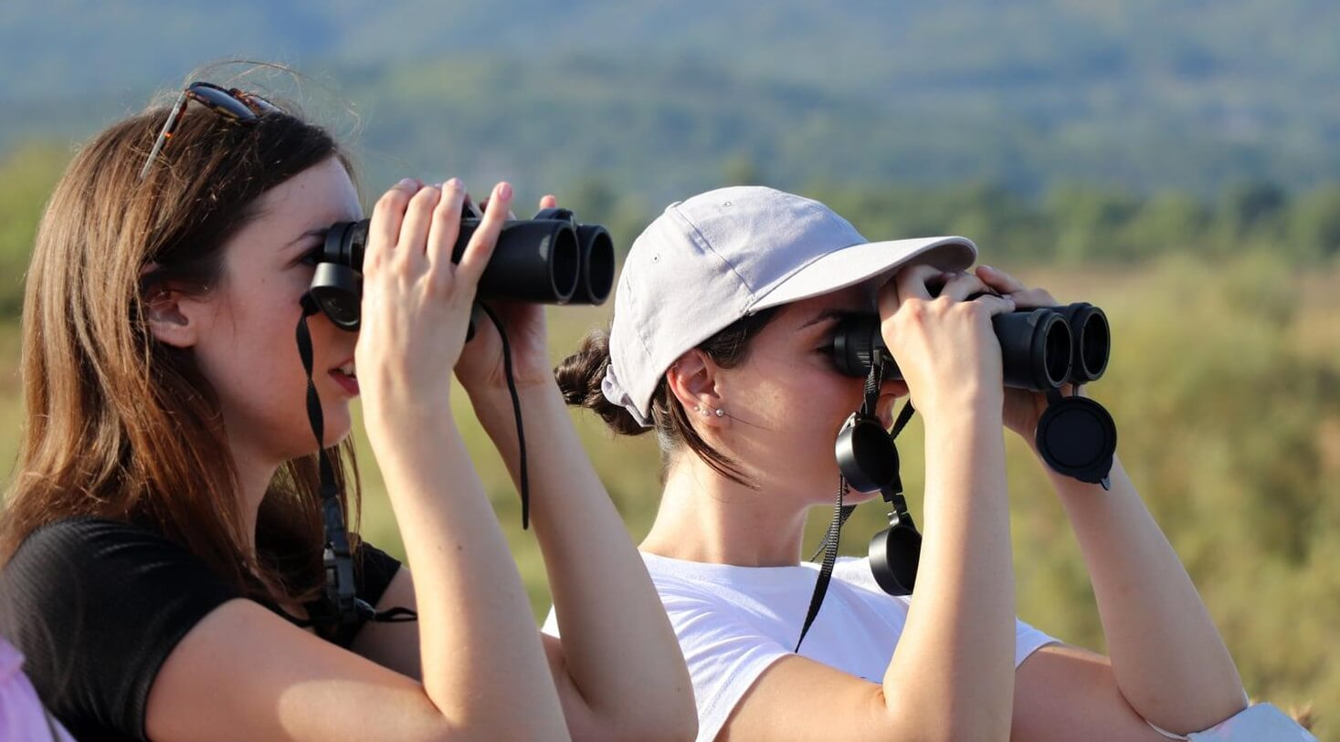 Ornithologists say bird watching in UK is