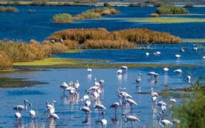 Ulcinj Salina – the kingdom of flamingos and 250 species of birds