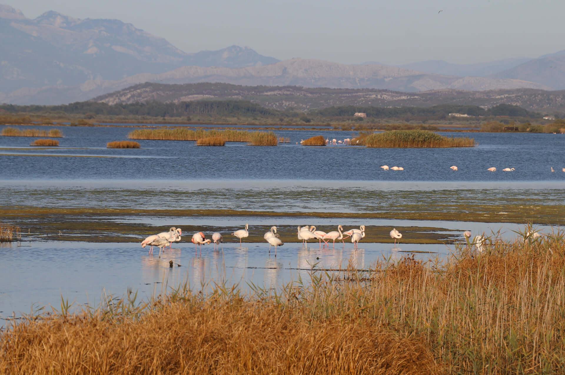 Ulcinj Salina has been associated with birds since its inception