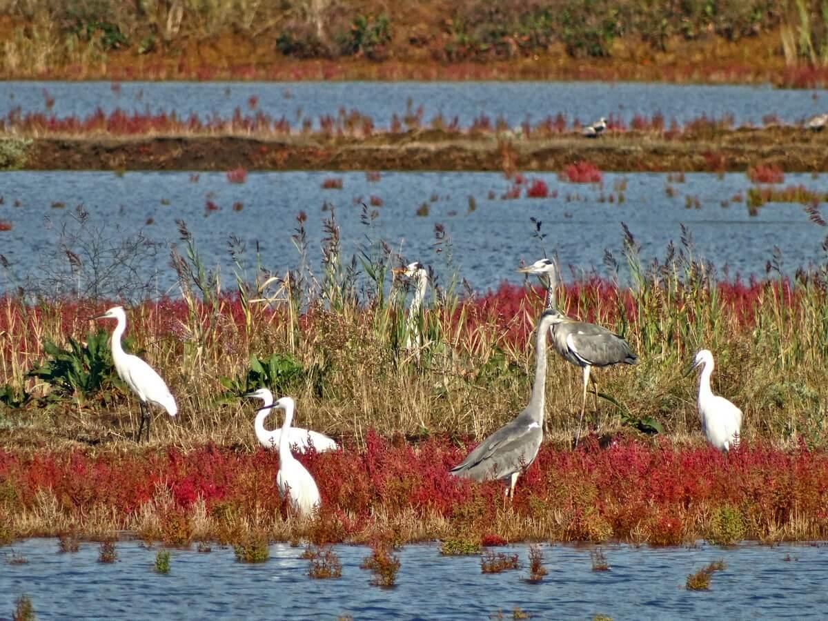 Ulcinj Salina is on the RAMSAR list as an internationally important wetland